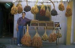 EL PALMYRA DE ORIENTE MEDIO SIRIA FECHA LA PLANTACIÓN Foto de archivo libre de regalías