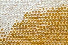 El panal de una colmena de la abeja llenó de la miel de oro en una opinión completa del marco Textura del fondo Fotos de archivo