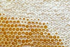 El panal de una colmena de la abeja llenó de la miel de oro en una opinión completa del marco Textura del fondo Fotografía de archivo libre de regalías