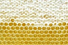 El panal de una colmena de la abeja llenó de la miel de oro en una opinión completa del marco Textura del fondo Imagen de archivo