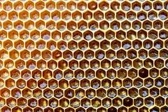 El panal de una colmena de la abeja llenó de la miel de oro en una opinión completa del marco Textura del fondo Imágenes de archivo libres de regalías