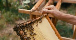 El panal en el marco de madera con las abejas está en las manos de apicultores desconocidos Tiro ROJO de la cámara cantidad 4k metrajes