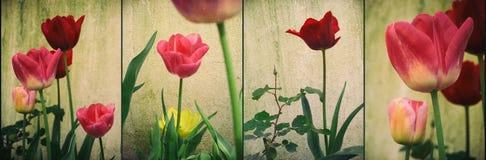 El panel de los tulipanes Fotografía de archivo