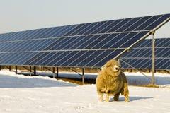 El panel solar y ovejas Imagenes de archivo