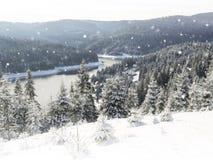 El panorama del bosque del invierno con los árboles cubrió nieve Imagen de archivo libre de regalías