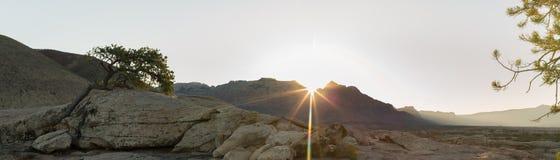 El panorama del sol que sube sobre el templo del oeste en el parque de Zion National y los slickrocks y los pinos a lo largo del  Imagen de archivo