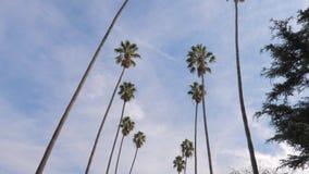 El panorama tiró de abajo hacia arriba las palmeras altas de California, 4K almacen de metraje de vídeo