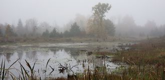 El pantano foto de archivo libre de regalías