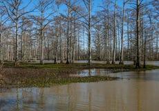 El pantano Imagen de archivo libre de regalías