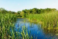 El pantano de Luisiana imagen de archivo libre de regalías