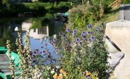 El pantano de Poitevin fotos de archivo libres de regalías