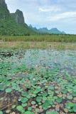 El pantano y la montaña del loto Fotos de archivo libres de regalías