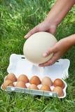 El paquete de huevos y la avestruz egg en manos de la mujer Imagen de archivo libre de regalías
