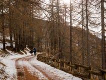 El par camina a través de bosque en nieve imagenes de archivo