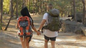 El par de caminantes continúa caminar en el bosque almacen de metraje de vídeo