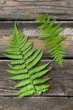 El par de helecho verde ramifica en la tabla de madera vieja Imágenes de archivo libres de regalías