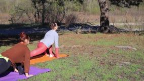 El par de mujeres que ejercitan aptitud de la yoga se divierte en Forest Park almacen de video
