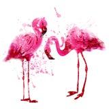 El par del flamenco del rosa de la acuarela del vector adentro salpica Foto de archivo libre de regalías