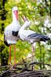 El par del ` s del pájaro casi es familia Imágenes de archivo libres de regalías