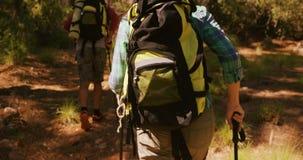 El par está caminando en el bosque metrajes