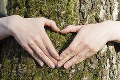 El par está poniendo sus manos en árbol en una forma del corazón Imagen de archivo