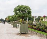 El par lleva a cabo las manos y los paseos a lo largo de la fila de los árboles frutales en conserva adentro Foto de archivo libre de regalías