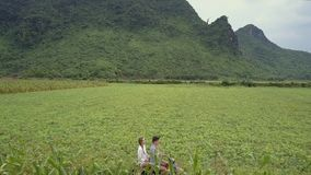 El par monta la vespa a lo largo de campos de maíz en la antena del pie de la colina almacen de video