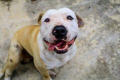 El parecer hambriento y feliz del perro y del cuenco para arriba aislado Imagen de archivo