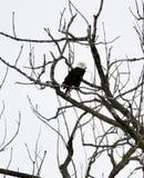 El parque de estado muerto de hambre de la roca se queda calvo Eagle #6 imágenes de archivo libres de regalías