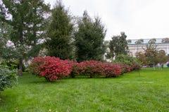 El parque de la ciudad de resto comió verde en el césped fotografía de archivo