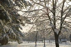 El parque del invierno foto de archivo