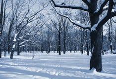 El parque del invierno Fotografía de archivo libre de regalías