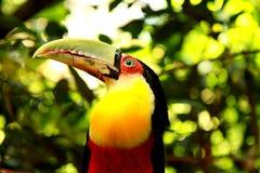 El parque del pájaro en Foz hace Iguacu Fotos de archivo