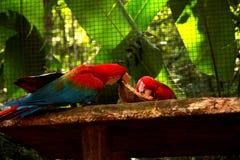 El parque del pájaro en Foz hace Iguacu Fotografía de archivo