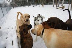 El parque del perro Fotografía de archivo