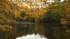 El parque del yedigoller de Bolu, hojea cayendo en el lago