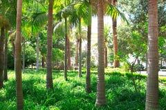 El parque hermoso de palmeras con una alta hierba verde imagenes de archivo