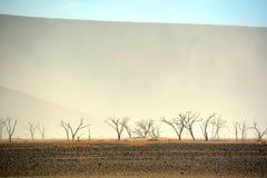 El parque nacional de Namib-Naukluft Imagen de archivo libre de regalías