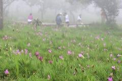 El parque nacional del PA Hin Ngam del campo de Krajeo está situado en el bosque, que está situado en el Thep de piedra hermoso S Foto de archivo libre de regalías