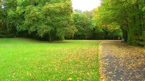 El parque y las hojas almacen de metraje de vídeo