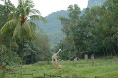 El parque zoológico Foto de archivo libre de regalías