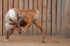 El parque zoológico de Great Plains en Sioux Falls, Dakota del Sur es una familia franco imágenes de archivo libres de regalías