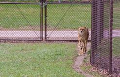 El parque zoológico de Great Plains en Sioux Falls, Dakota del Sur es una familia franco fotografía de archivo libre de regalías