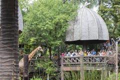 El parque zoológico del dusit, Bangkok, Tailandia - 18 de agosto: alimentación de la familia del ourist foto de archivo