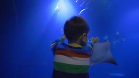 El parque zoológico, muchacho del niño cuenta los animales acuáticos que nadan en el acuario azul grande almacen de metraje de vídeo