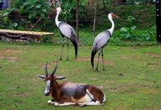 el parque zoológico salvaje en Guangzhou, Guangdong, China Fotos de archivo