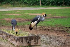 el parque zoológico salvaje en Guangzhou, Guangdong, China Fotografía de archivo libre de regalías