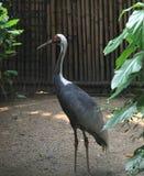 el parque zoológico salvaje en Guangzhou, Guangdong, China Imagen de archivo