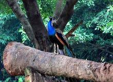 el parque zoológico salvaje en Guangzhou, Guangdong, China Imagenes de archivo