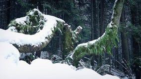 El pasar Forest Trees Buried In Snow almacen de metraje de vídeo